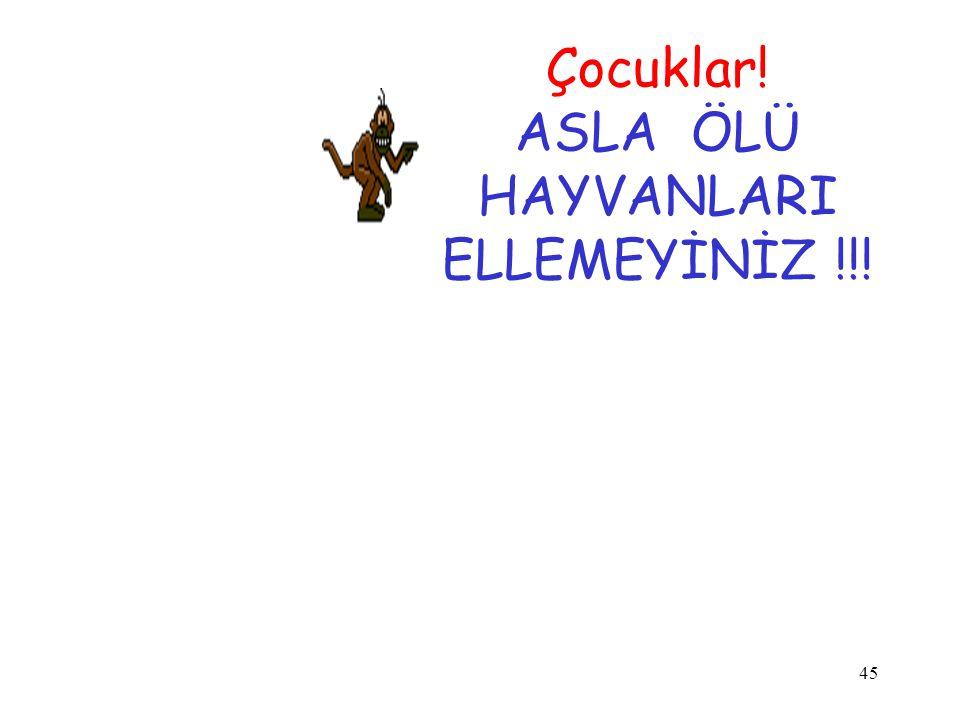 45 Çocuklar! ASLA ÖLÜ HAYVANLARI ELLEMEYİNİZ !!!