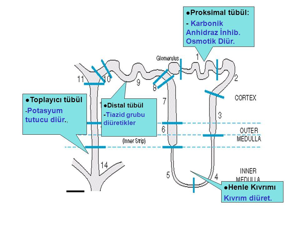 Proksimal tübül: - Karbonik Anhidraz İnhib. Osmotik Diür. Henle Kıvrımı Kıvrım diüret. Distal tübül -Tiazid grubu diüretikler Toplayıcı tübül - Potasy