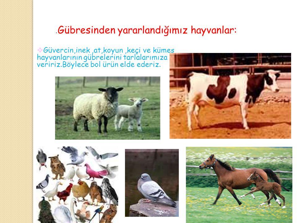 Besininden yararlandığımız hayvanlar: Koyun, keçi, inek gibi hayvanlarının etinden ve sütünden yararlanırız.Kümes hayvanlarının etinden ve yumurtasınd