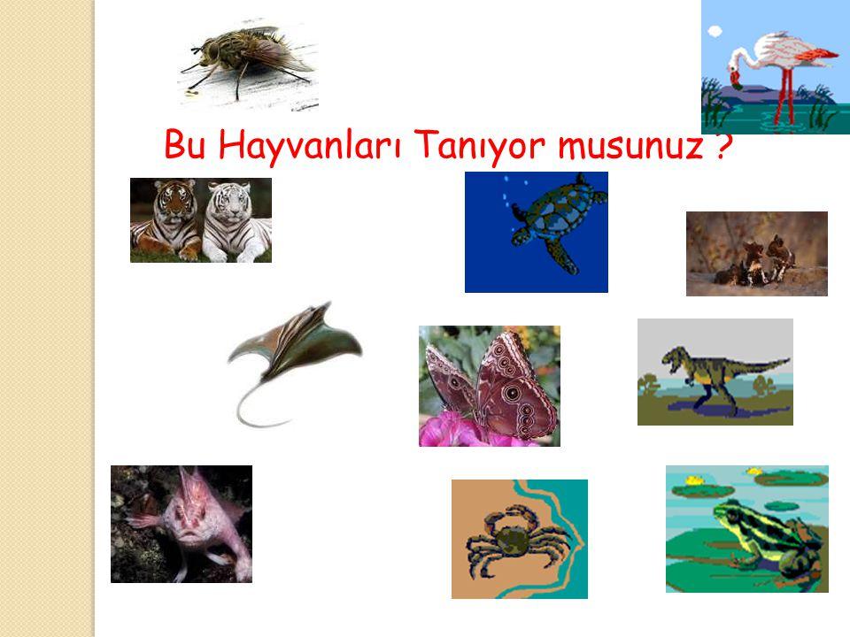 Suda Yaşayan Hayvanlar