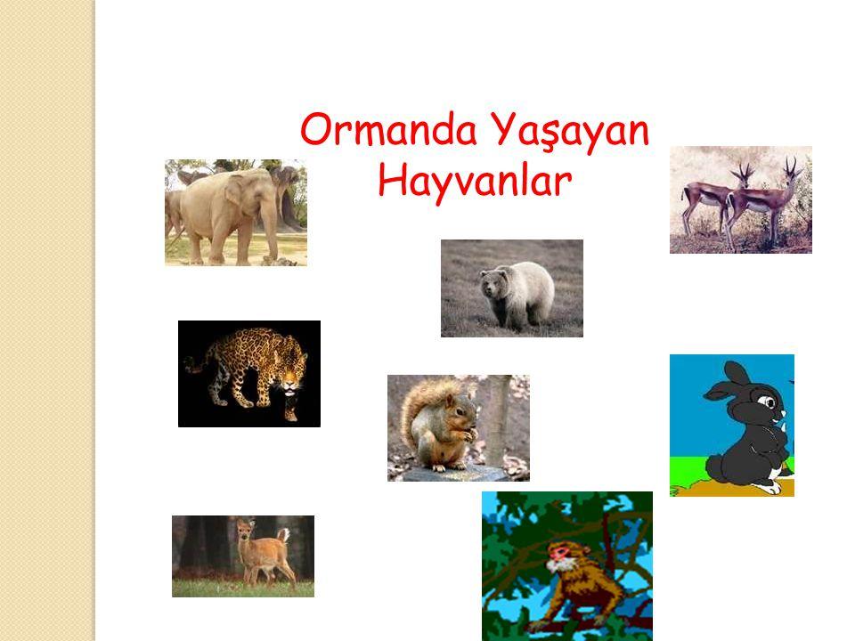 Bu Hayvanları Tanıyor musunuz ?