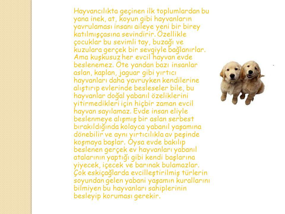 Evcil Hayvanlar İnsanların evde hayvan besleme alışkanlığı, yabanıl hayvanlardan bazılarını evcilleştirdikleri tarihöncesi çağlara kadar uzanır. Çünkü