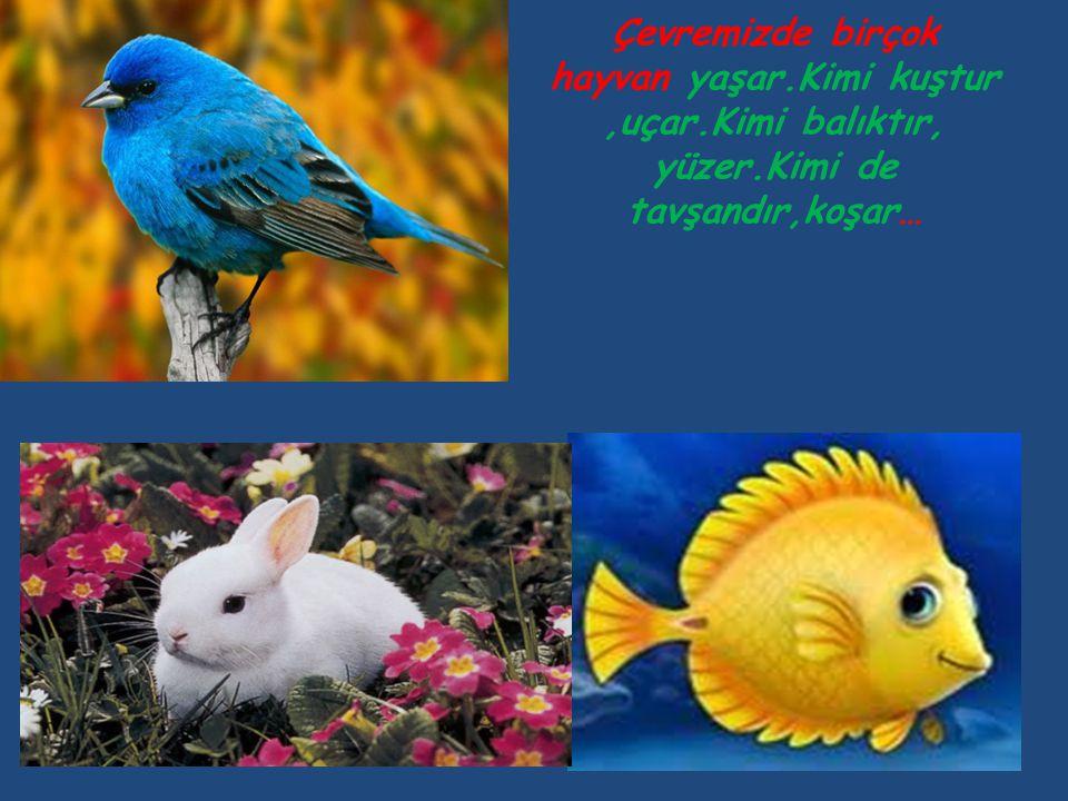 Canlılar dünyası;insanlar,bitkiler ve hayvanlardan oluşmaktadır.