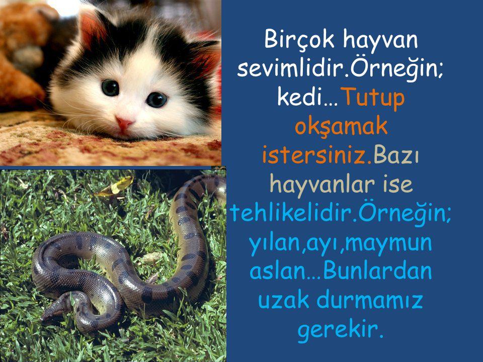 Çevremizde birçok hayvan yaşar.Kimi kuştur,uçar.Kimi balıktır, yüzer.Kimi de tavşandır,koşar…
