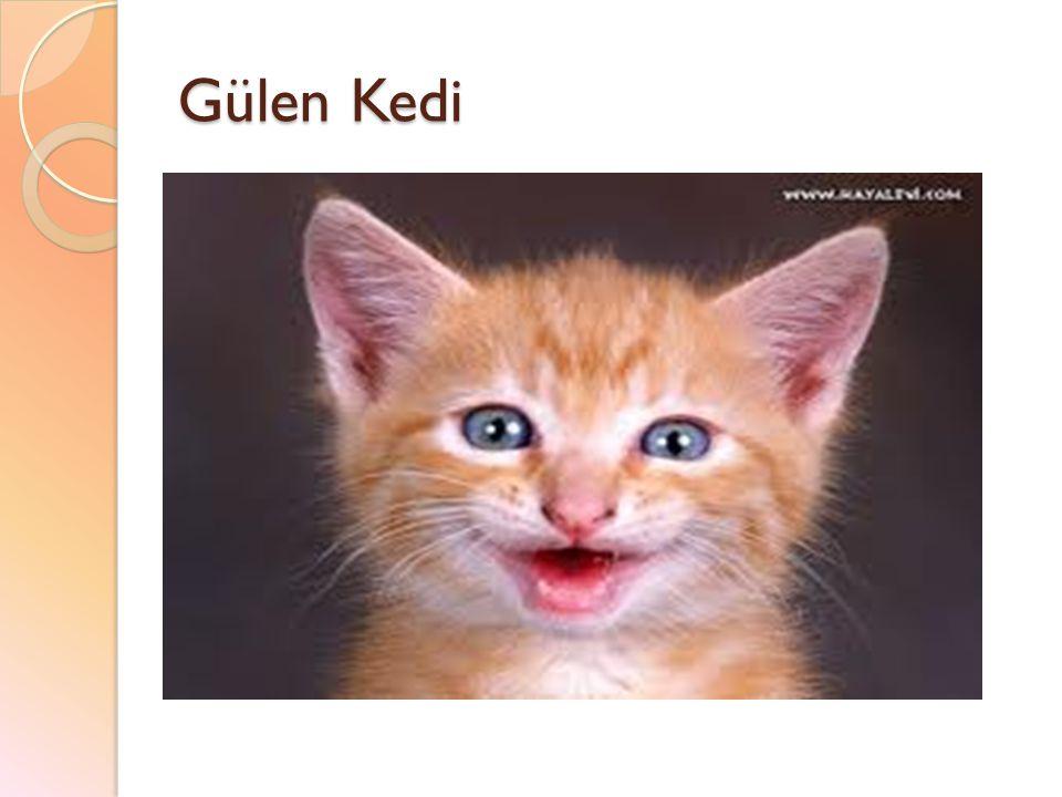 Gülen Kedi