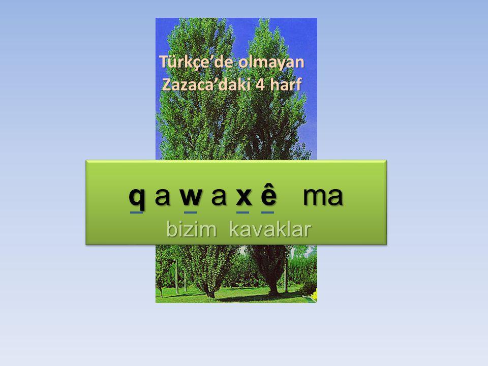 q a w a x ê ma bizim kavaklar Türkçe'de olmayan Zazaca'daki 4 harf