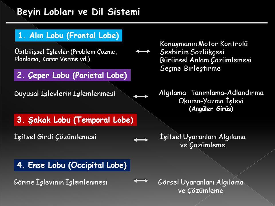 Üstbilişsel İşlevler (Problem Çözme, Planlama, Karar Verme vd.) Konuşmanın Motor Kontrolü Sesbirim Sözlükçesi Bürünsel Anlam Çözümlemesi Seçme-Birleştirme Beyin Lobları ve Dil Sistemi 1.