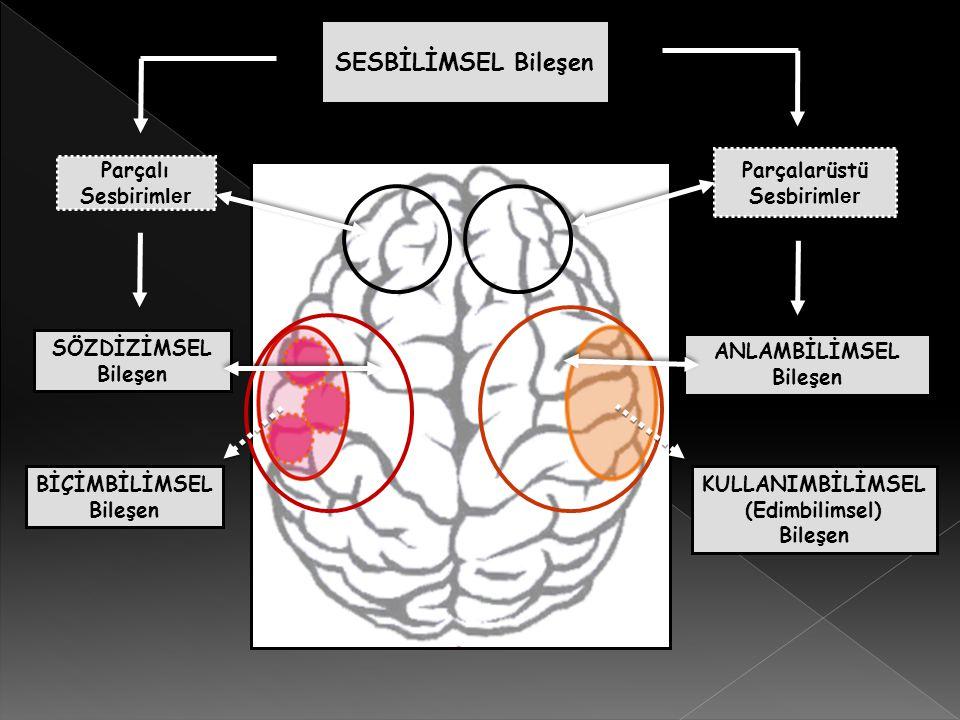 Parçalı Sesbirimler (b.a.r.d.a.k.) Parçalarüstü Sesbirimler (ton, odak, vurgu, ezgi, durak, kavşak, ses rengi) DÜŞÜNCE SİSTEMİ KAVRAMLAR Dünya Bilgisi Mantıksal Bağlar Deneyim Kültürel Öğeler Soyut-Somut Ayrımı Üstbilişsel İlişkilendirme Zihinsel Dilbilgisi Ö bek Y apı Yaratıcılık DİLSEL ÜRÜN Seçme-Birleştirme Dizisel-Dizimsel İlişkiler Ayırıcı Özellikler Biçimbirimler Bağlam ve Paylaşılan Bilgi Figüratif, Deyimsel ve İronik Anlatım Duygudurum Algılama-Anlamlandırma
