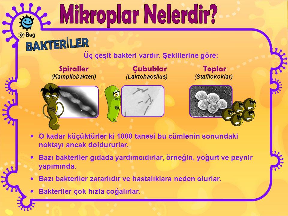 Üç çeşit bakteri vardır. Şekillerine göre: Spiraller Çubuklar Toplar (Kampilobakteri) (Laktobacsilus) (Stafilokoklar)  O kadar küçüktürler ki 1000 ta