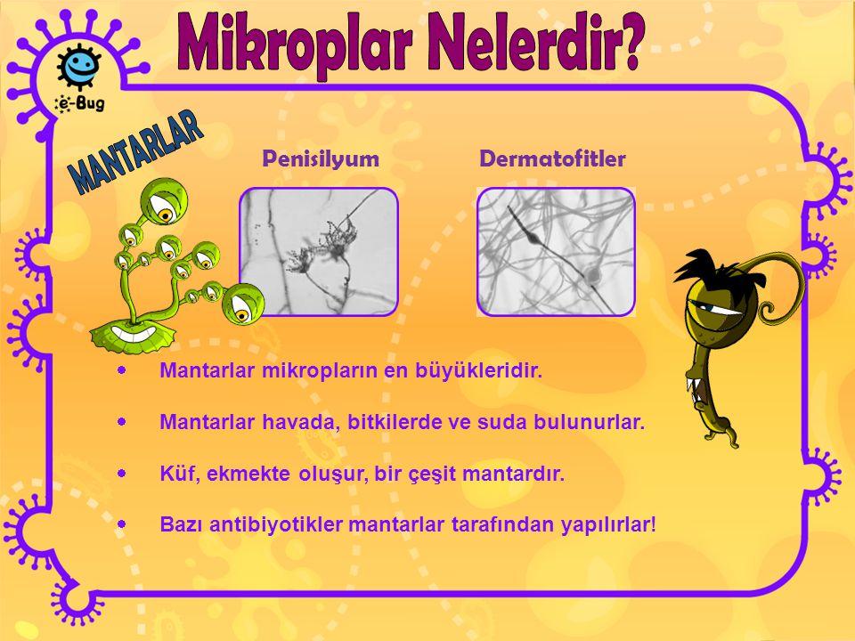 PenisilyumDermatofitler  Mantarlar mikropların en büyükleridir.  Mantarlar havada, bitkilerde ve suda bulunurlar.  Küf, ekmekte oluşur, bir çeşit m