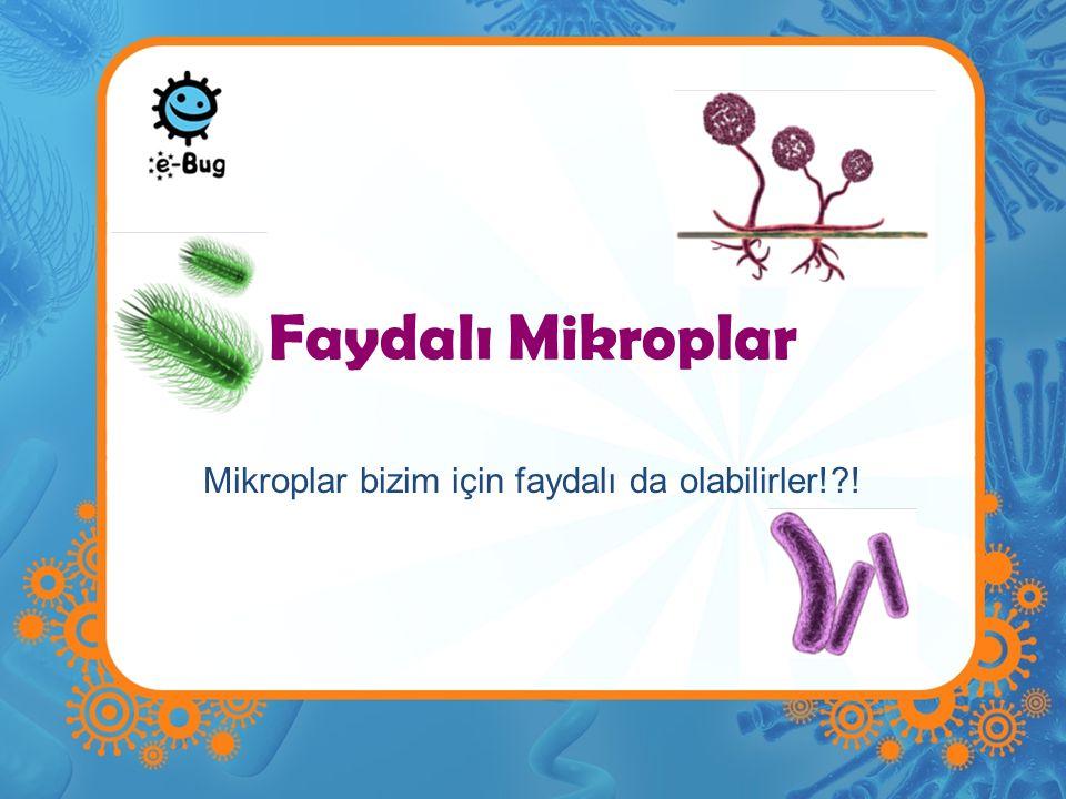 Faydalı Mikroplar Mikroplar bizim için faydalı da olabilirler!?!