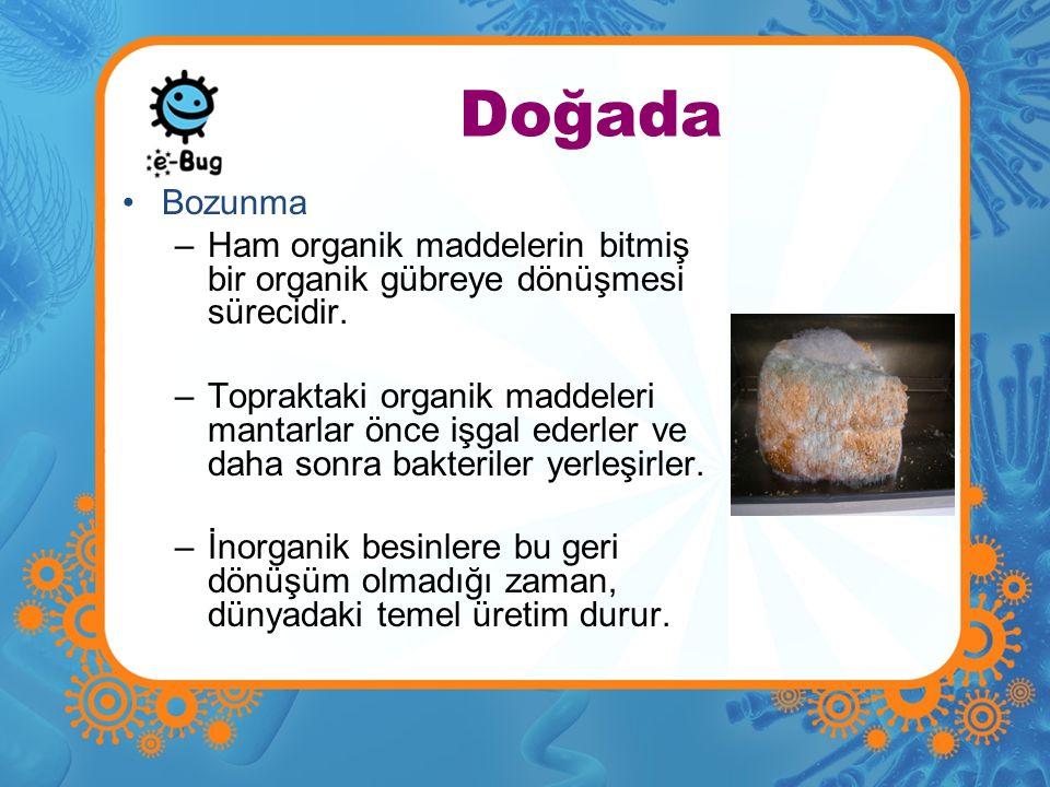 Doğada Bozunma –Ham organik maddelerin bitmiş bir organik gübreye dönüşmesi sürecidir. –Topraktaki organik maddeleri mantarlar önce işgal ederler ve d