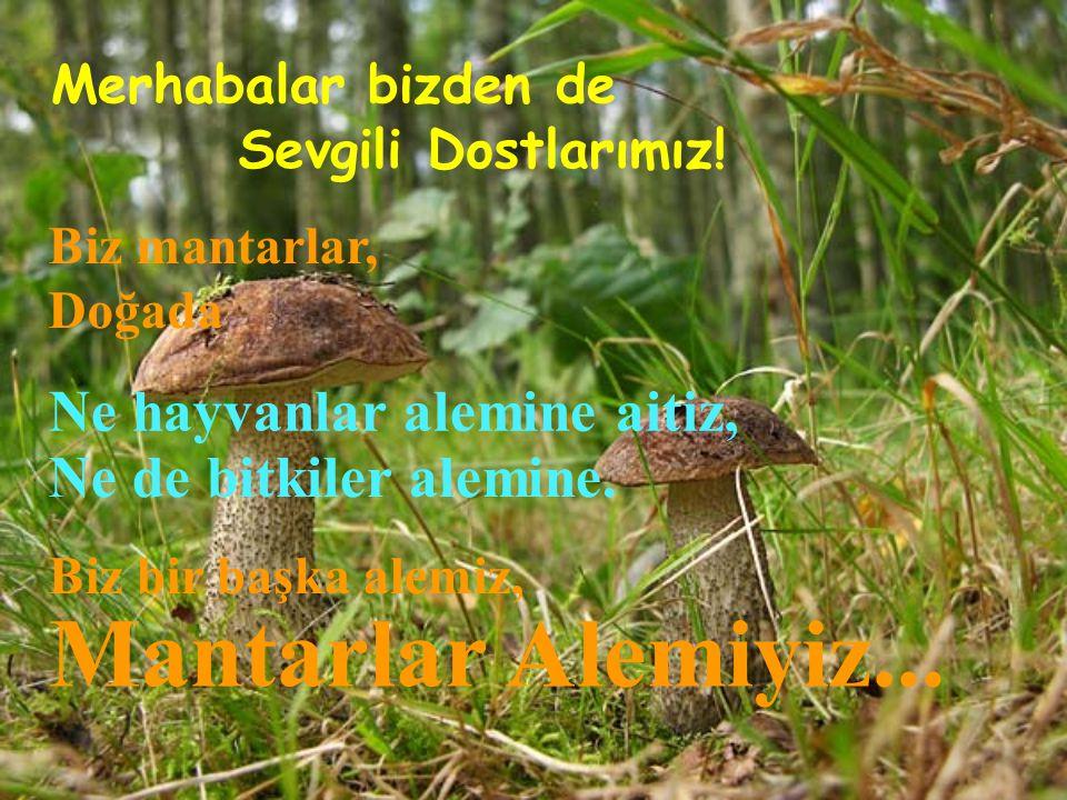 Aleuria aurantia (Kâse mantarı)