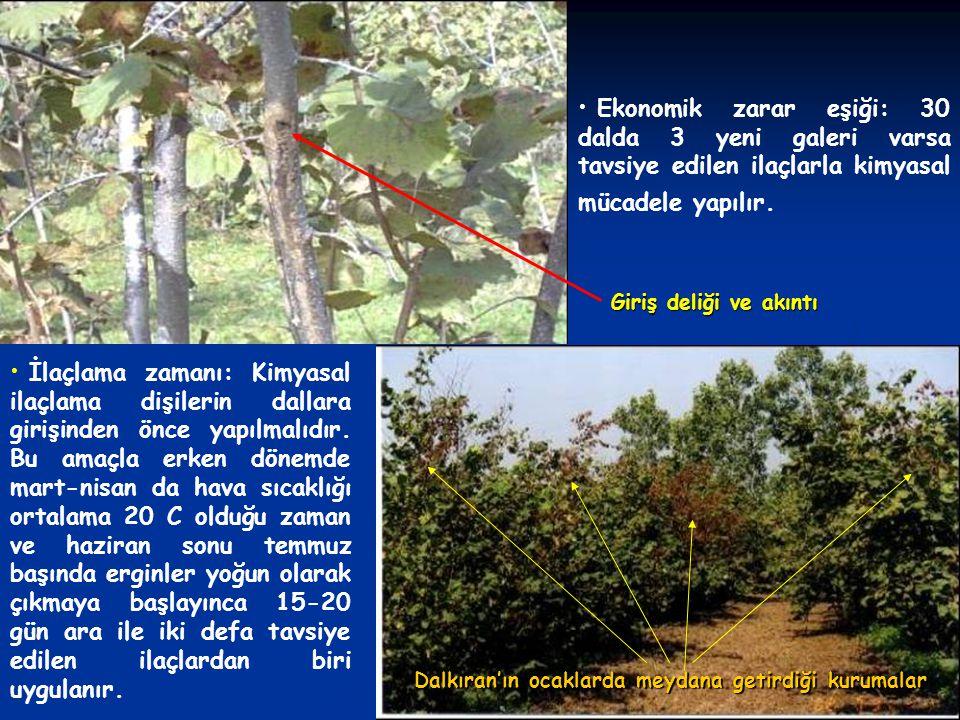 Dal kanseri (Nectria galligena Bres) Mücadelesi: Bahçelerde inokulum kaynağı olan bulaşık dalların yoğun bir şekilde budanması ve budama artıklarının bahçeden uzaklaştırılması kontrol açısından önemlidir.