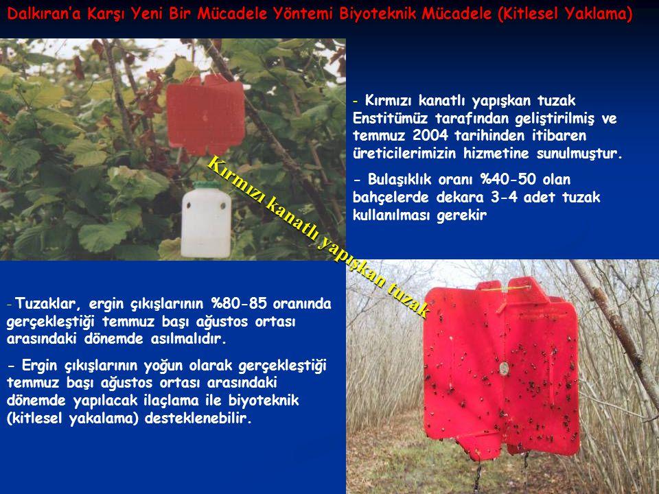 Dalkıran'a Karşı Yeni Bir Mücadele Yöntemi Biyoteknik Mücadele (Kitlesel Yaklama) - Kırmızı kanatlı yapışkan tuzak Enstitümüz tarafından geliştirilmiş