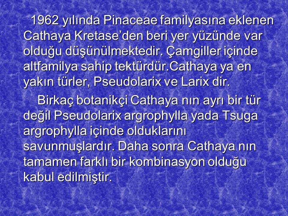 1962 yılında Pinaceae familyasına eklenen Cathaya Kretase'den beri yer yüzünde var olduğu düşünülmektedir. Çamgiller içinde altfamilya sahip tektürdür