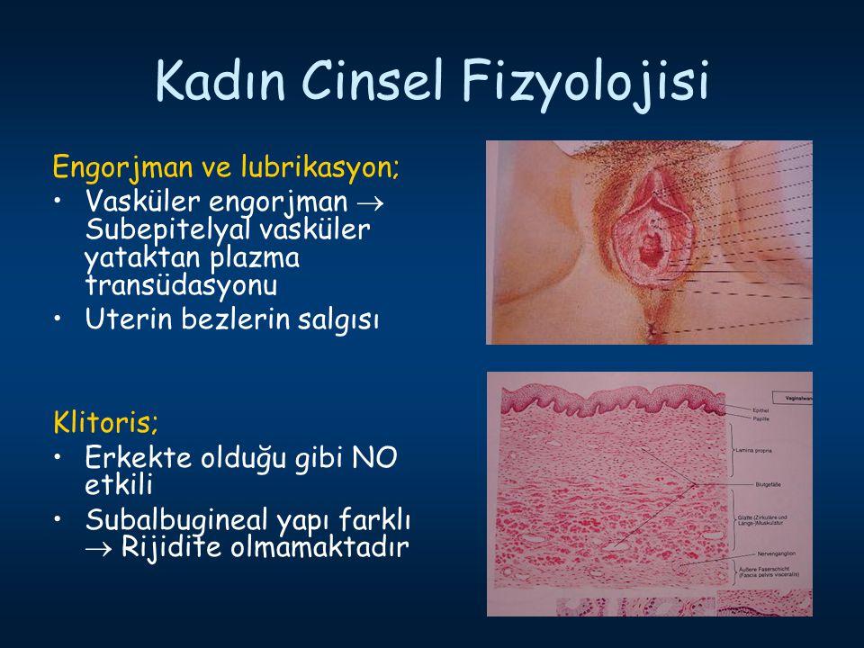 Kadın Cinsel Fizyolojisi Engorjman ve lubrikasyon; Vasküler engorjman  Subepitelyal vasküler yataktan plazma transüdasyonu Uterin bezlerin salgısı Kl