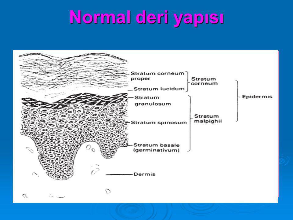 Normal deri yapısı