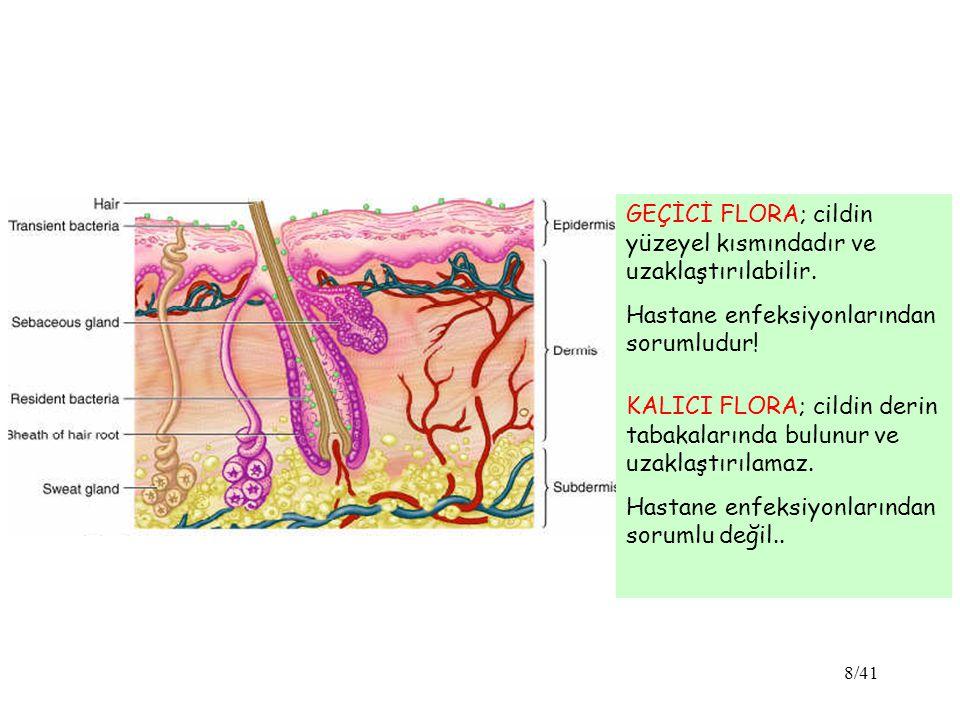 8/41 GEÇİCİ FLORA; cildin yüzeyel kısmındadır ve uzaklaştırılabilir.