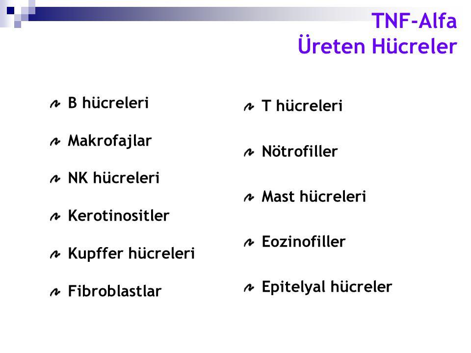 B hücreleri Makrofajlar NK hücreleri Kerotinositler Kupffer hücreleri Fibroblastlar T hücreleri Nötrofiller Mast hücreleri Eozinofiller Epitelyal hücr