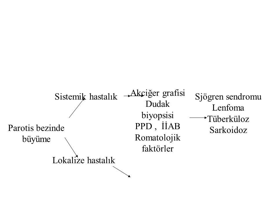 Parotis bezinde büyüme Sistemik hastalık Lokalize hastalık Akciğer grafisi Dudak biyopsisi PPD, İİAB Romatolojik faktörler Sjögren sendromu Lenfoma Tüberküloz Sarkoidoz