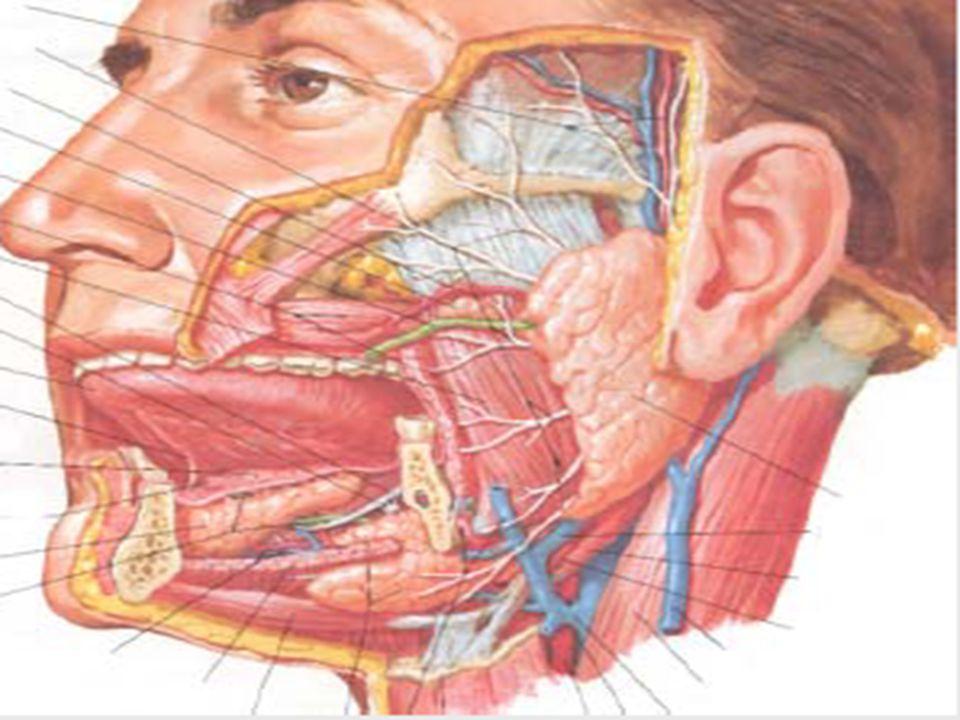 Basit eksizyonda % 30 nüks Rekürrens psödopodlara bağlıdır Cerrahi eksizyon (süperfisiyal parotidektomi ) Fasiyal sinir çoğunlukla korunur