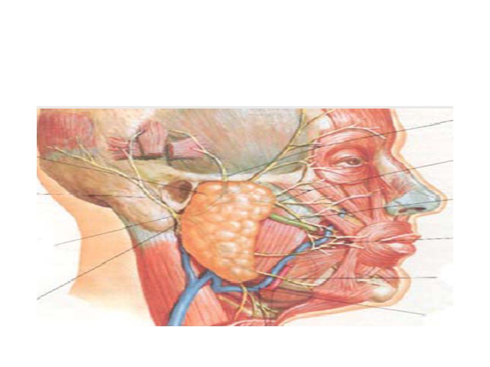 Rekürren,Kronik Siyaloadenit Siyalolitiyazis, striktür veya siyalektaziye sekonder gelişen obstrüksiyon sonucu oluşur.