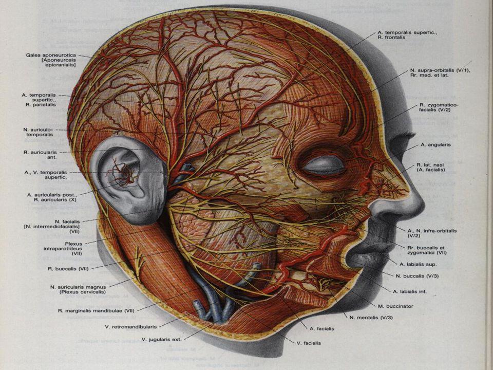 Tükrük sekresyonunda azalma ve staz vardır.Hastalar yemek esnasında artan parotis ağrı ve şişliğinden yakınırlar.