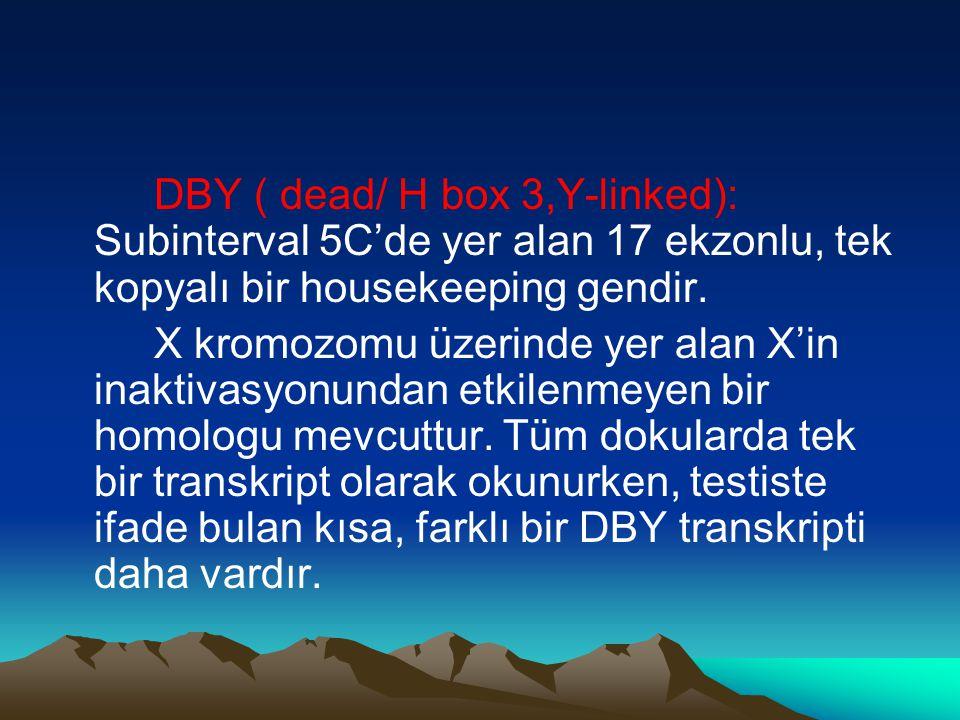 DBY ( dead/ H box 3,Y-linked): Subinterval 5C'de yer alan 17 ekzonlu, tek kopyalı bir housekeeping gendir. X kromozomu üzerinde yer alan X'in inaktiva