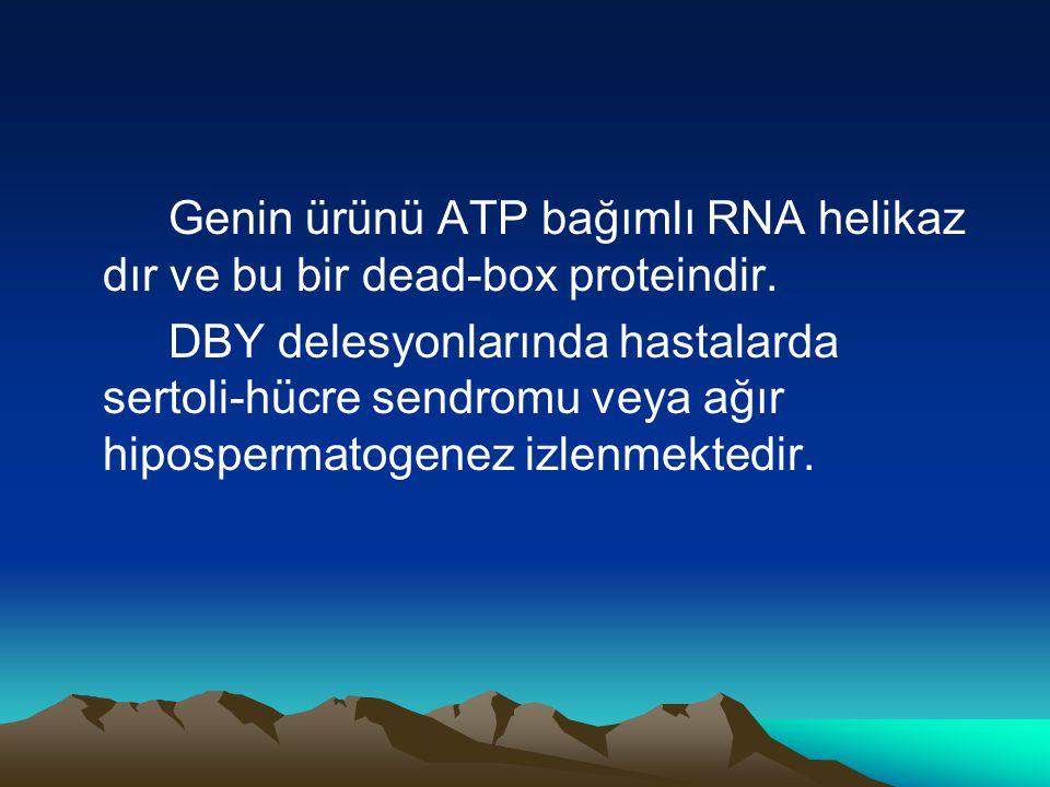 Genin ürünü ATP bağımlı RNA helikaz dır ve bu bir dead-box proteindir. DBY delesyonlarında hastalarda sertoli-hücre sendromu veya ağır hipospermatogen
