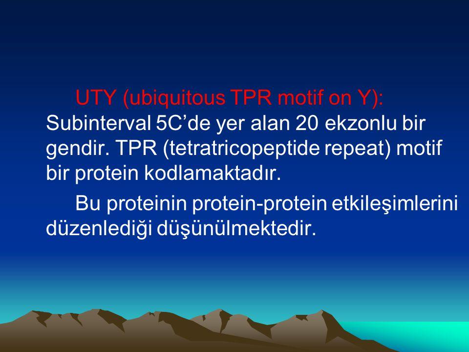 UTY (ubiquitous TPR motif on Y): Subinterval 5C'de yer alan 20 ekzonlu bir gendir. TPR (tetratricopeptide repeat) motif bir protein kodlamaktadır. Bu