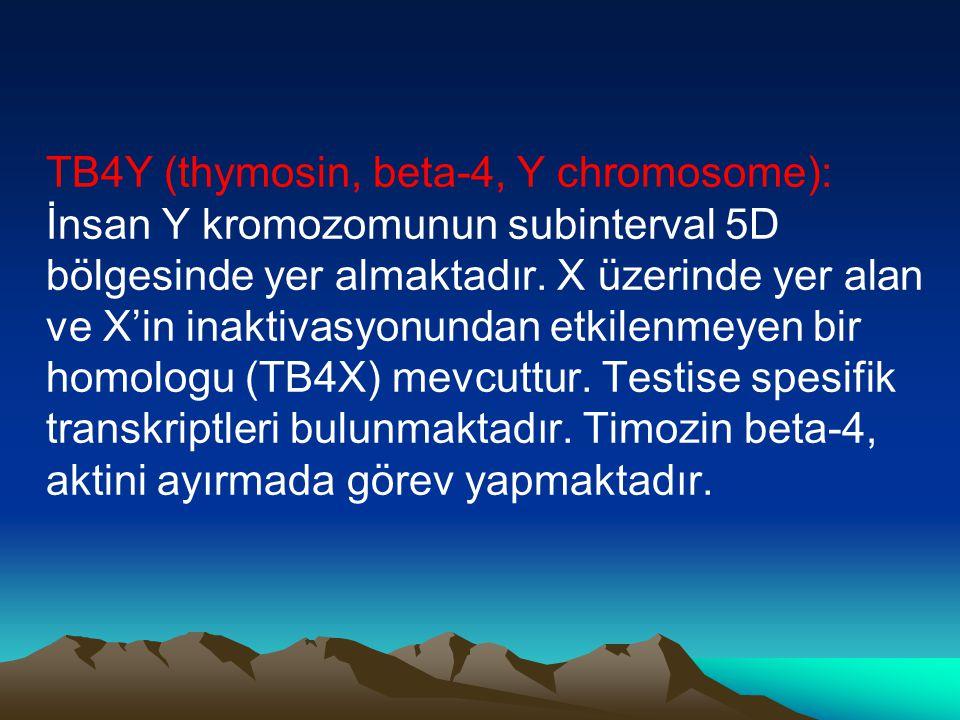 TB4Y (thymosin, beta-4, Y chromosome): İnsan Y kromozomunun subinterval 5D bölgesinde yer almaktadır. X üzerinde yer alan ve X'in inaktivasyonundan et