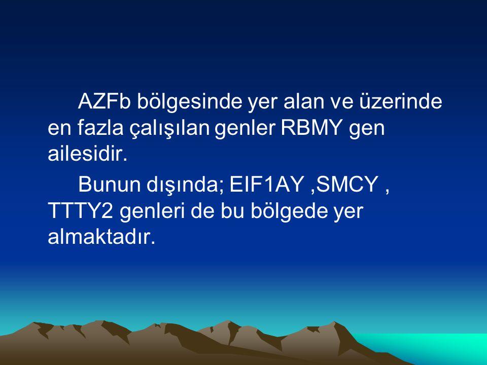 AZFb bölgesinde yer alan ve üzerinde en fazla çalışılan genler RBMY gen ailesidir. Bunun dışında; EIF1AY,SMCY, TTTY2 genleri de bu bölgede yer almakta