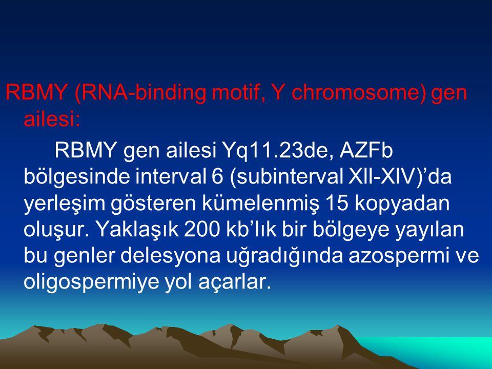 RBMY (RNA-binding motif, Y chromosome) gen ailesi: RBMY gen ailesi Yq11.23de, AZFb bölgesinde interval 6 (subinterval Xll-XlV)'da yerleşim gösteren kü