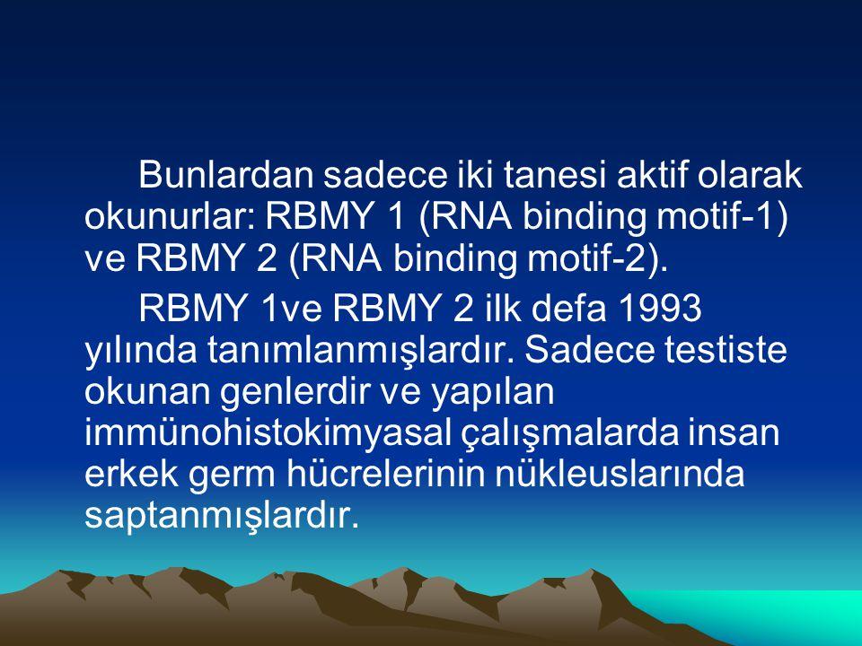 Bunlardan sadece iki tanesi aktif olarak okunurlar: RBMY 1 (RNA binding motif-1) ve RBMY 2 (RNA binding motif-2). RBMY 1ve RBMY 2 ilk defa 1993 yılınd