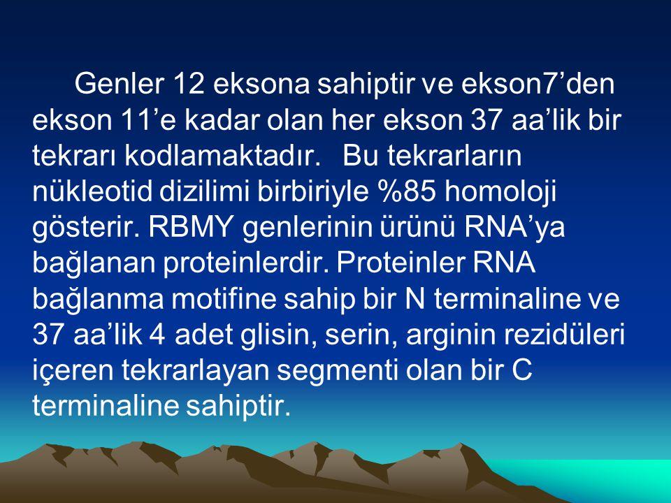 Genler 12 eksona sahiptir ve ekson7'den ekson 11'e kadar olan her ekson 37 aa'lik bir tekrarı kodlamaktadır. Bu tekrarların nükleotid dizilimi birbiri