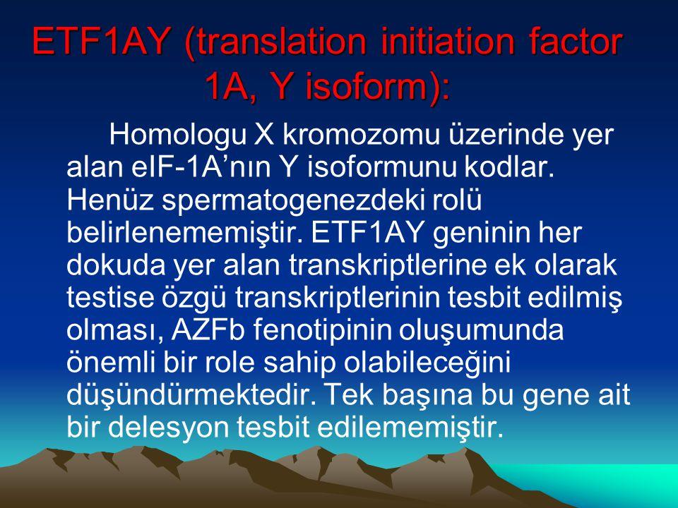 ETF1AY (translation initiation factor 1A, Y isoform): Homologu X kromozomu üzerinde yer alan eIF-1A'nın Y isoformunu kodlar. Henüz spermatogenezdeki r