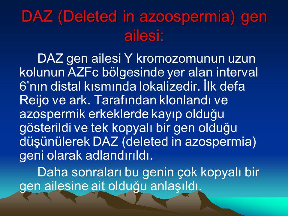 DAZ (Deleted in azoospermia) gen ailesi: DAZ gen ailesi Y kromozomunun uzun kolunun AZFc bölgesinde yer alan interval 6'nın distal kısmında lokalizedi