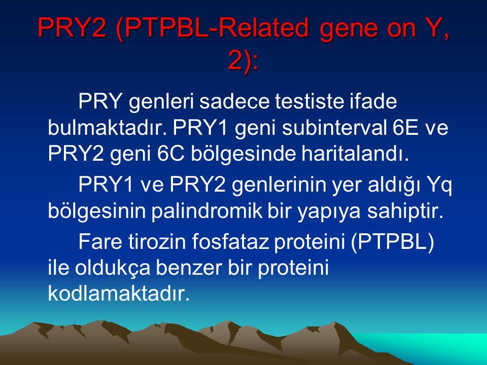 PRY2 (PTPBL-Related gene on Y, 2): PRY genleri sadece testiste ifade bulmaktadır. PRY1 geni subinterval 6E ve PRY2 geni 6C bölgesinde haritalandı. PRY