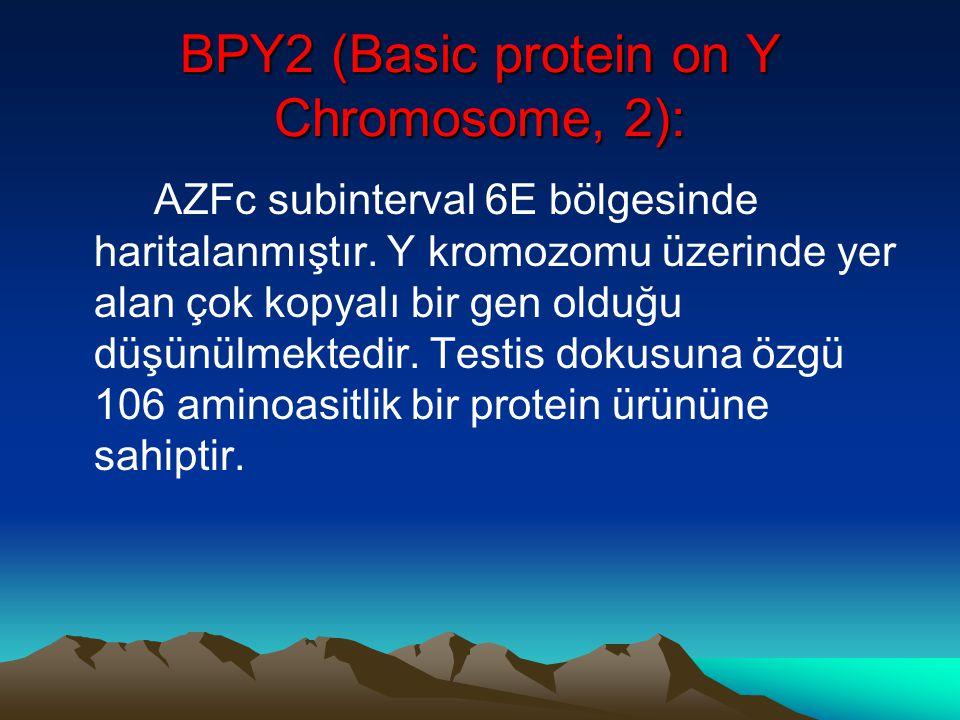 BPY2 (Basic protein on Y Chromosome, 2): AZFc subinterval 6E bölgesinde haritalanmıştır. Y kromozomu üzerinde yer alan çok kopyalı bir gen olduğu düşü