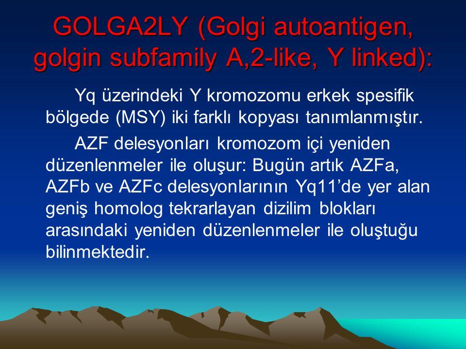 GOLGA2LY (Golgi autoantigen, golgin subfamily A,2-like, Y linked): Yq üzerindeki Y kromozomu erkek spesifik bölgede (MSY) iki farklı kopyası tanımlanm