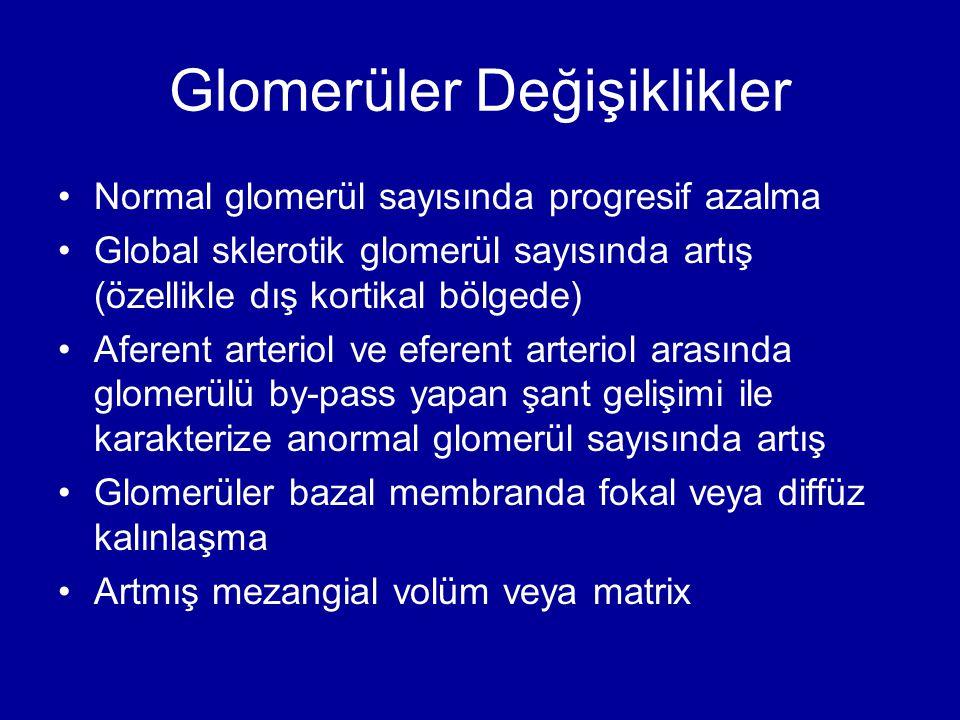 Glomerüler Değişiklikler Normal glomerül sayısında progresif azalma Global sklerotik glomerül sayısında artış (özellikle dış kortikal bölgede) Aferent