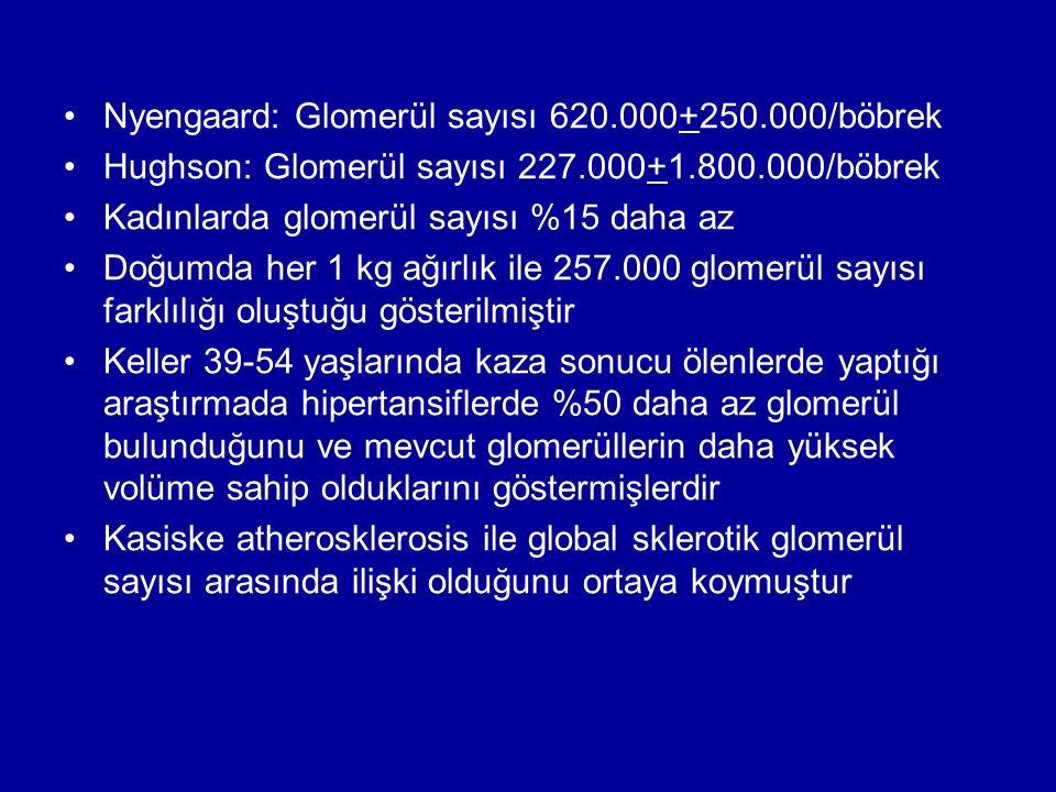 Nyengaard: Glomerül sayısı 620.000+250.000/böbrek Hughson: Glomerül sayısı 227.000+1.800.000/böbrek Kadınlarda glomerül sayısı %15 daha az Doğumda her