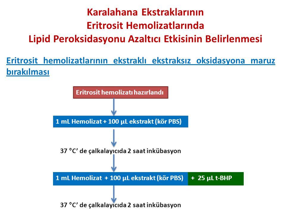 Eritrosit hemolizatı hazırlandı 1 mL Hemolizat + 100 µL ekstrakt (kör PBS) 37 °C' de çalkalayıcıda 2 saat inkübasyon 1 mL Hemolizat + 100 µL ekstrakt (kör PBS)+ 25 µL t-BHP Karalahana Ekstraklarının Eritrosit Hemolizatlarında Lipid Peroksidasyonu Azaltıcı Etkisinin Belirlenmesi Eritrosit hemolizatlarının ekstraklı ekstraksız oksidasyona maruz bırakılması
