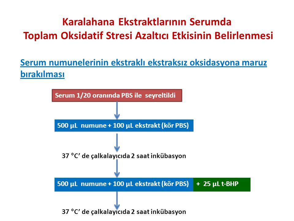 Serum 1/20 oranında PBS ile seyreltildi 500 µL numune + 100 µL ekstrakt (kör PBS) 37 °C' de çalkalayıcıda 2 saat inkübasyon 500 µL numune + 100 µL ekstrakt (kör PBS)+ 25 µL t-BHP Serum numunelerinin ekstraklı ekstraksız oksidasyona maruz bırakılması Karalahana Ekstraktlarının Serumda Toplam Oksidatif Stresi Azaltıcı Etkisinin Belirlenmesi