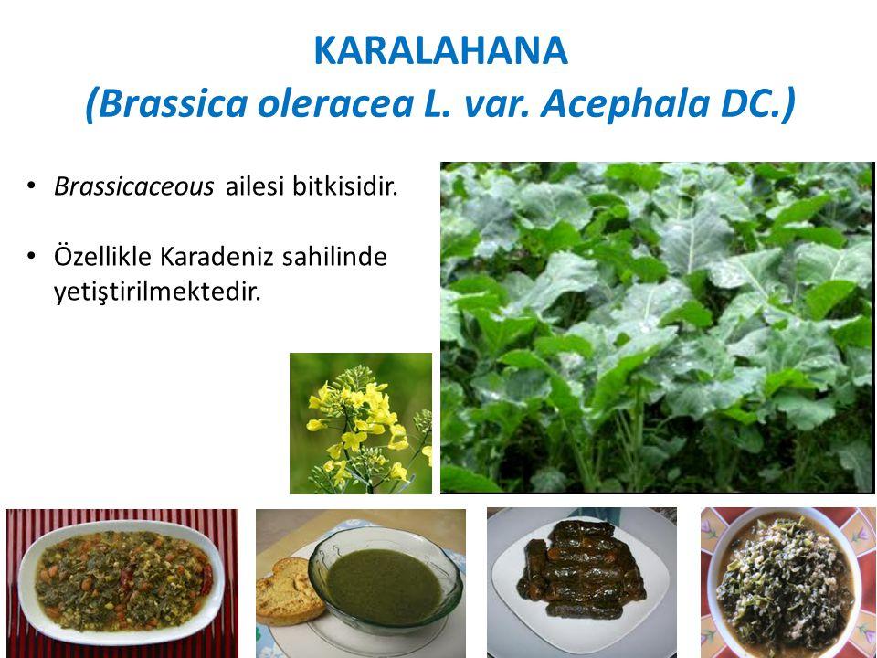 KARALAHANA (Brassica oleracea L.var. Acephala DC.) Brassicaceous ailesi bitkisidir.
