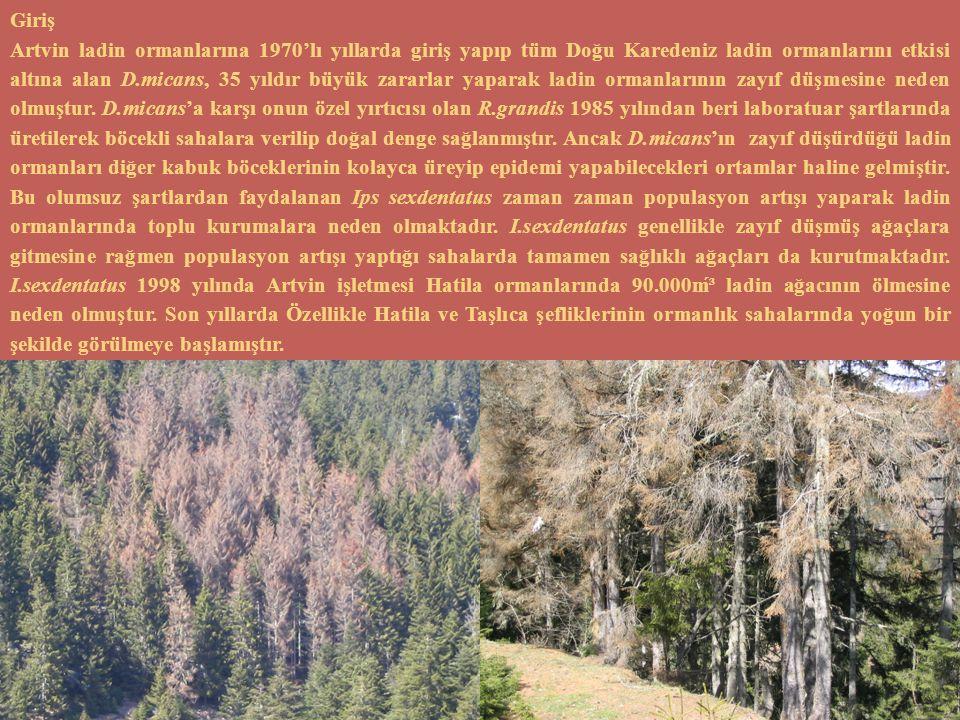 Giriş Artvin ladin ormanlarına 1970'lı yıllarda giriş yapıp tüm Doğu Karedeniz ladin ormanlarını etkisi altına alan D.micans, 35 yıldır büyük zararlar