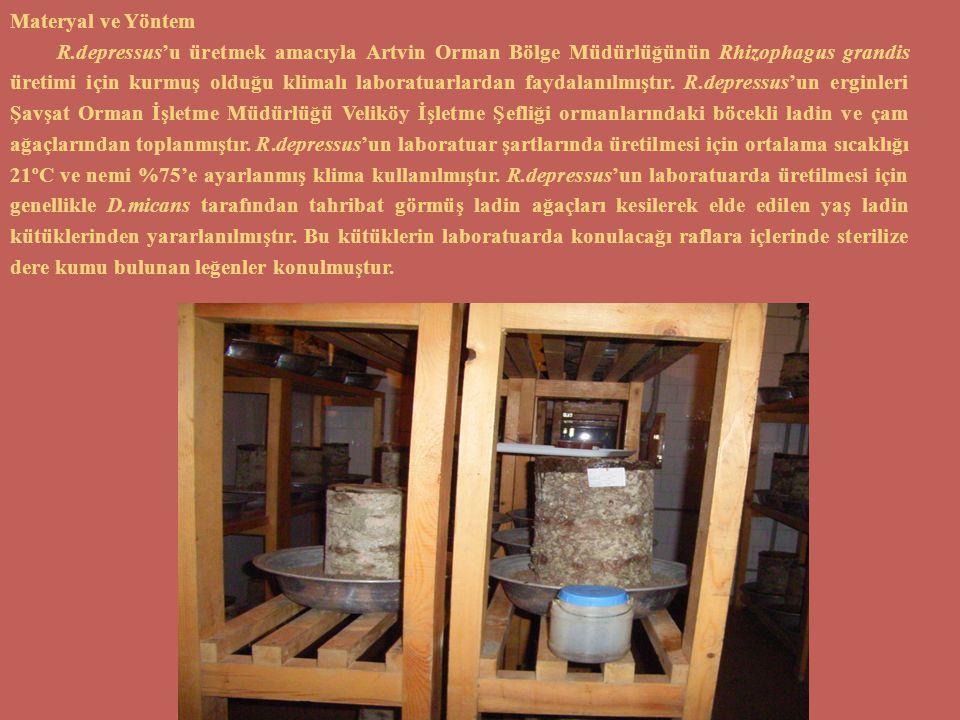 Materyal ve Yöntem R.depressus'u üretmek amacıyla Artvin Orman Bölge Müdürlüğünün Rhizophagus grandis üretimi için kurmuş olduğu klimalı laboratuarlar