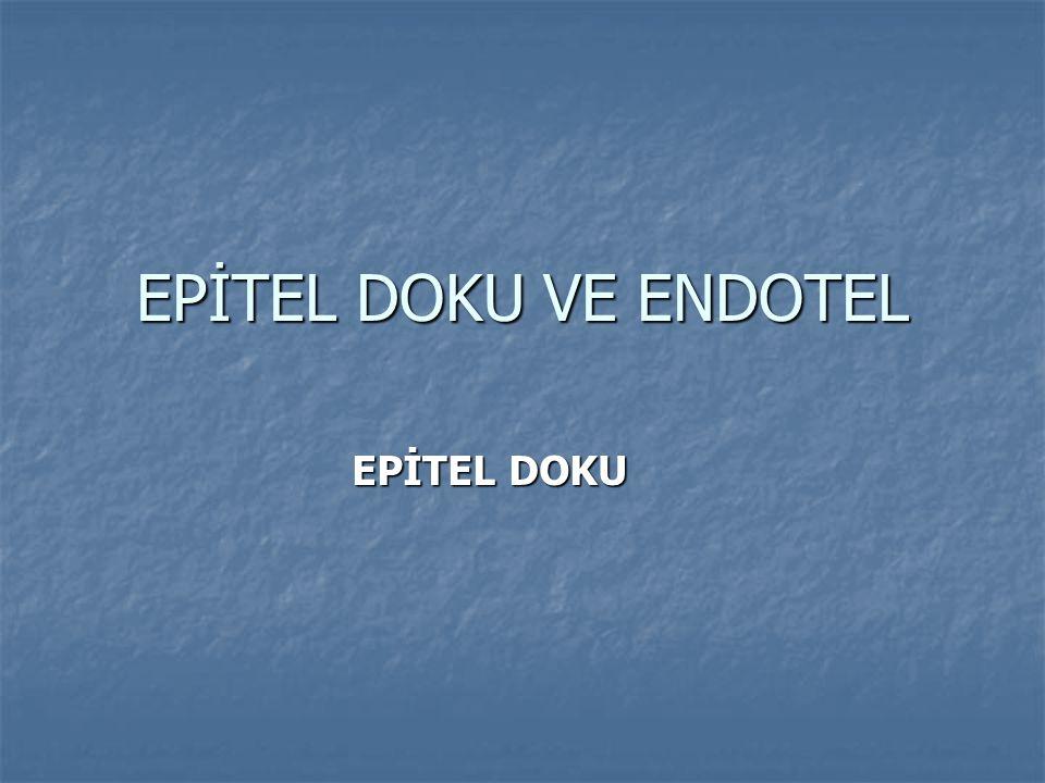 EPİTEL DOKU VE ENDOTEL EPİTEL DOKU