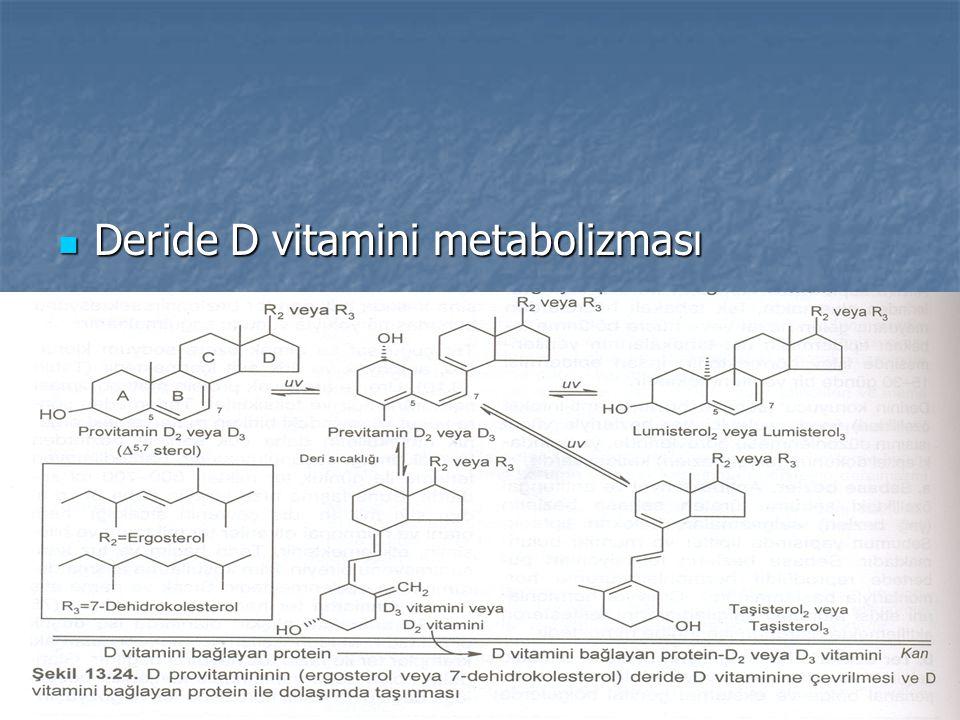 Deride D vitamini metabolizması Deride D vitamini metabolizması